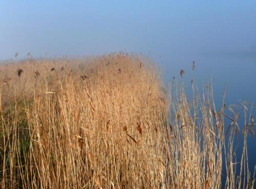 The Norfolk Broads on a misty morning